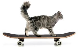 חתול עם צל-min